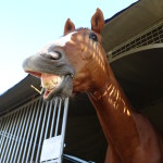 cheval-pension
