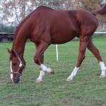 écurie-cheval